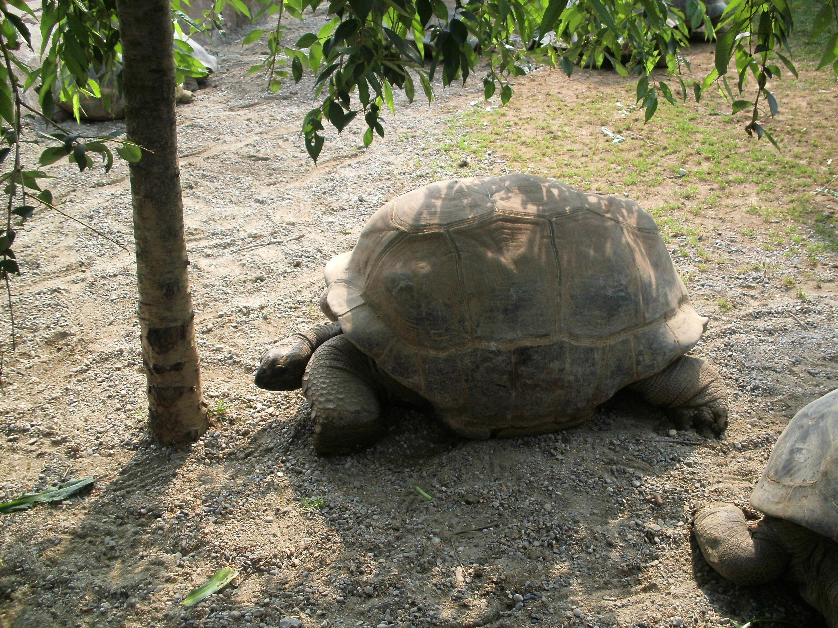 "Parco Faunistico ""Le Cornelle"", le tartarughe"