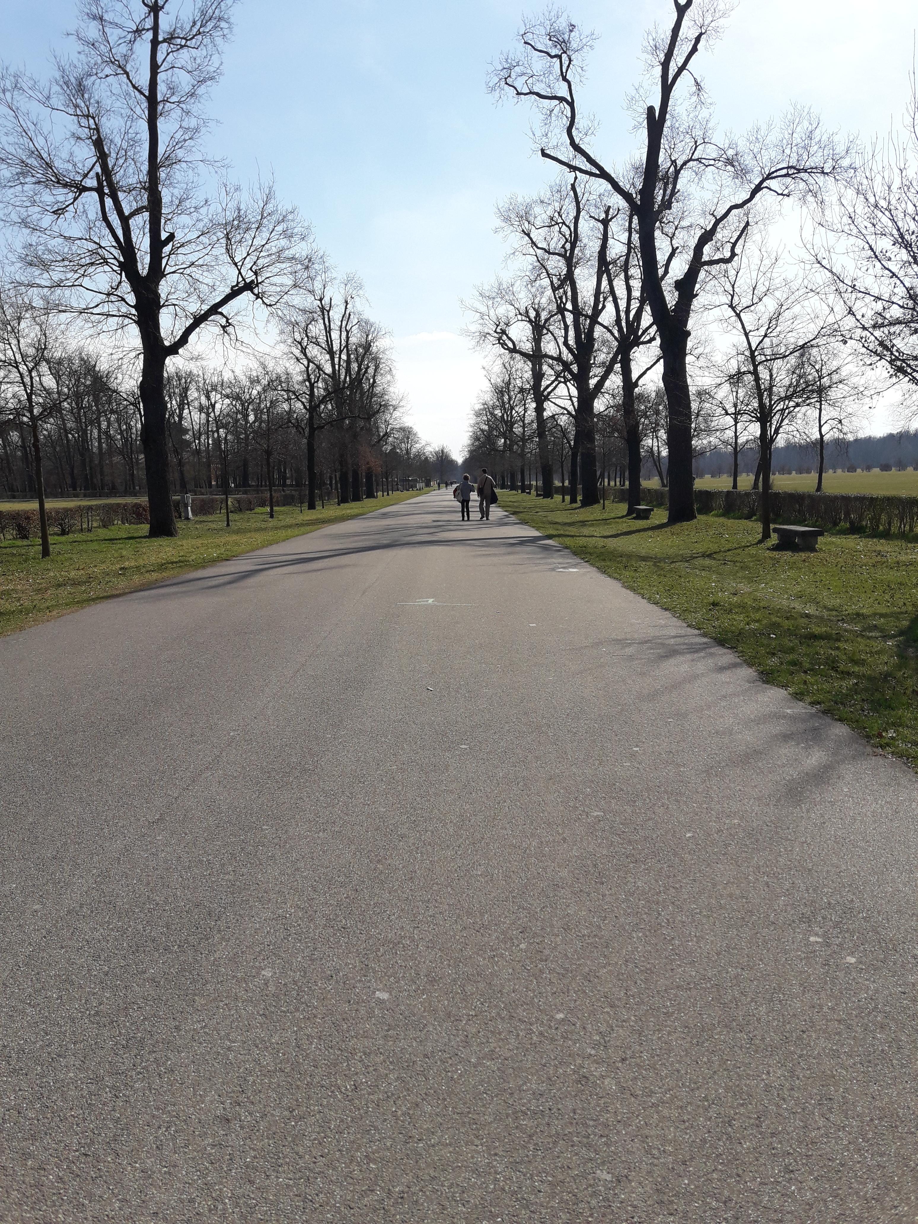 Passeggiata culturale al Parco di Monza,viale di Vedano