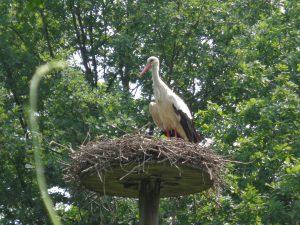 10 parchi con animali e fattorie in Lombardia,le cicogne