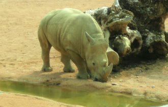 10 parchi con animali e fattorie in Lombardia,il rinoceronte