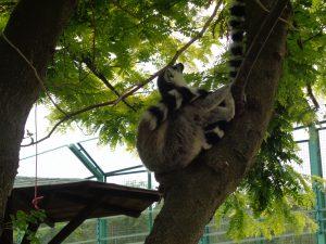 10 parchi con animali e fattorie in Lombardia, animali esotici