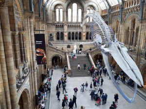 Natural museum a londra