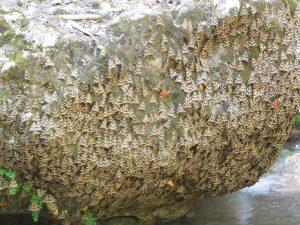 Masso ricoperto di farfalle alla Valle delle farfalle