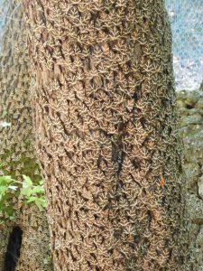 isitare la valle delle farfalle: tronco ricoperto da farfalle