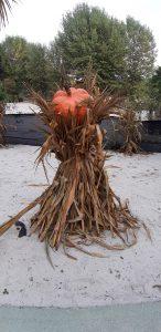 zucca ad Aquaneva a Halloween