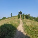 Passeggiate nel Parco del curone coi bambini: i cipressi