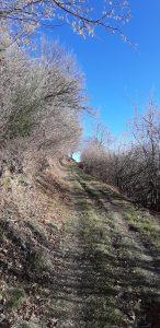 strada nel bosco di caglio