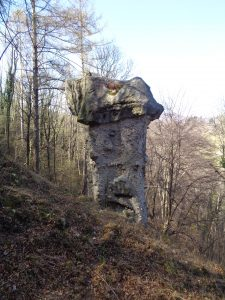 I funghi di terra di Rezzago