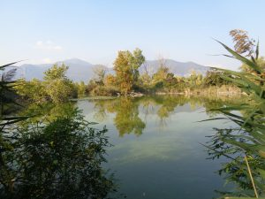Passeggiate per famiglie in Lombardia: le torbiere del sebino
