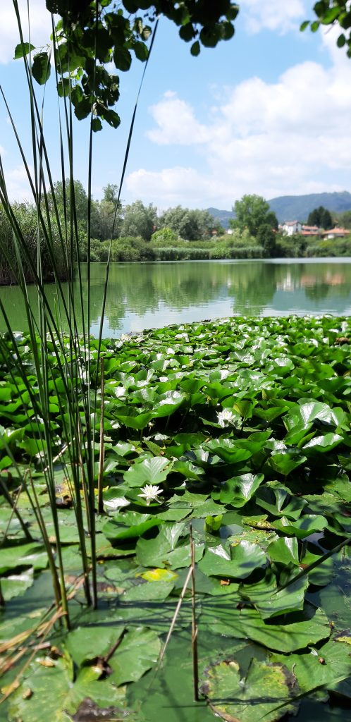 visitare il lago di sartirana: le ninfee