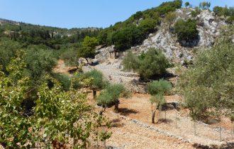 ulivi dell'Askos Stone Park